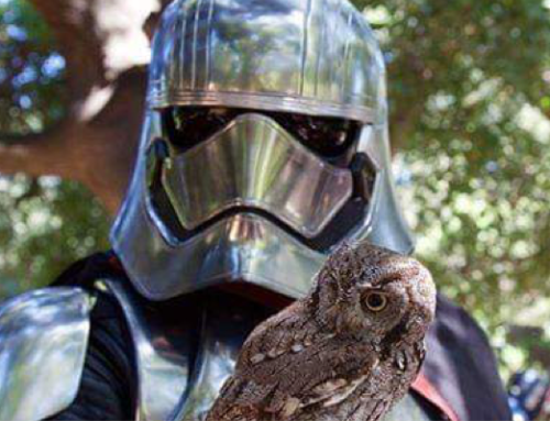 OC Zoo and 501st Legion Southern California Garrison to Make Out of this World Fun on June 22