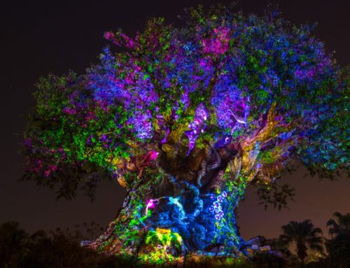 Walt Disney World Resort Offers More Disney After Hour Events at Magic Kingdom and Disney's Animal Kingdom