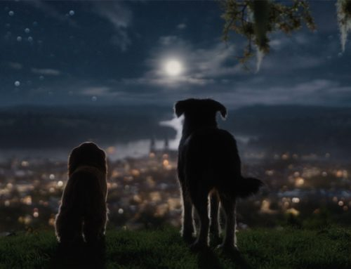 New Trailer for Live-Action Lady and the Tramp Released During ABC's Dancing with the Stars