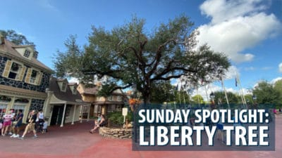 Sunday Spotlight: Liberty Tree in Liberty Square
